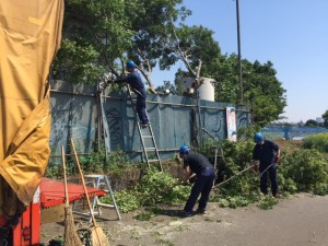 大島樹木伐採1