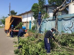 大島樹木伐採2